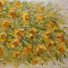 Jana-Fryblova-Zlute-kvety